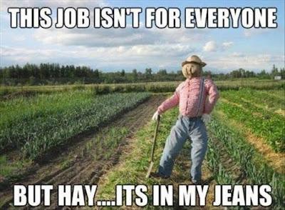 garden humor, farming humor, farm joke, farmer jokes, job isn't for everyone, job isn't for everyone hay jeans, scarecrow