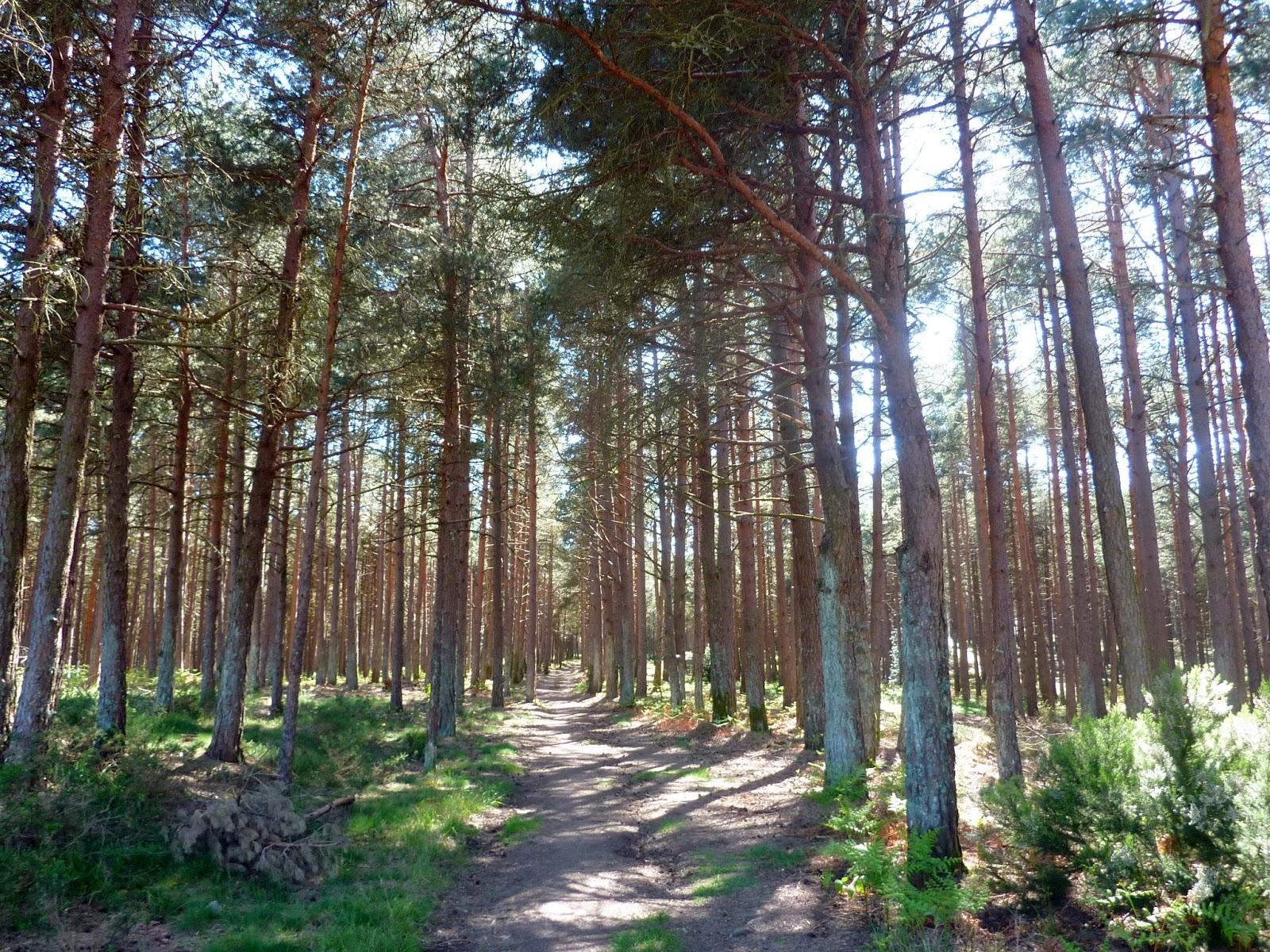 the forest verlasse niemals