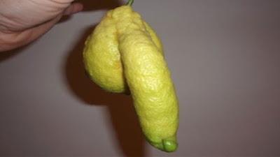 gambar lemon lemes