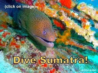 Dive Sumatra - Click on Image for Details: