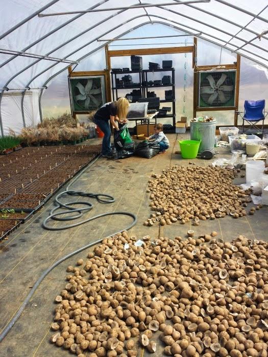 Cobblestone Project Farm