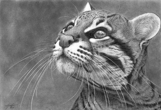 realistic animal drawings realistic graphite pencil drawing cat bird watcher