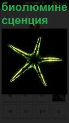 Живой организм биолюминесценция в виде светящейся пятиконечной звезды на темном фоне желтым цветом