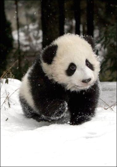 Fletcher's Castoria: Panda Baby