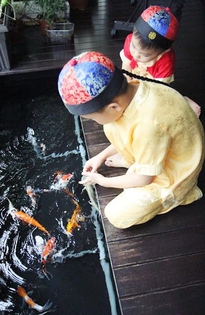 koi pond chinese new year