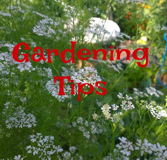 gardening tips, Youtube