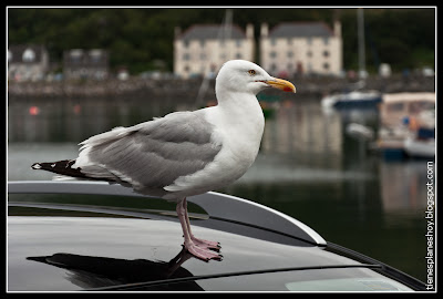 Mallaig (Escocia)