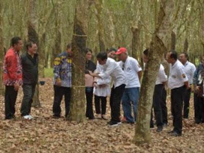Ingin Naikkan Harga Karet, Jokowi Kurangi Kirim ke Luar Negeri