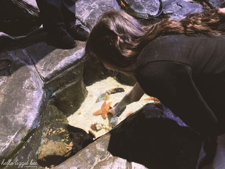 touching starfish