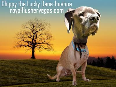 Chippy the Lucky Danehuahua, Royal Flusher's dog