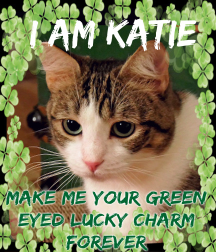Katie Kat needs a NEW home