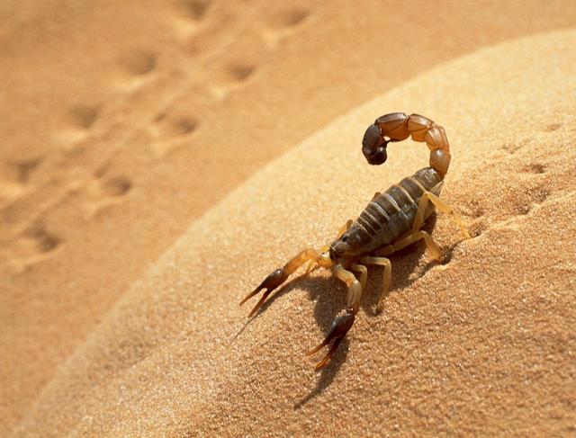 Bichos perigosos no deserto em Las Vegas
