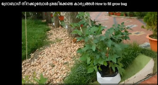 how to fill grow bag