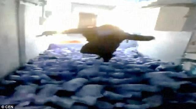 Υπέρβαρος αγρότης κάνει «βουτιά» πάνω σε νεογέννητα γουρουνάκια και σκοτώνει 79 (βίντεο)
