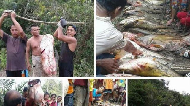Wow, Warga Ini Asyik Panen Ikan Berukuran Jumbo