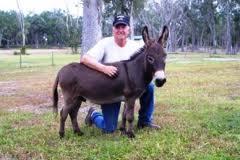 Miniature Donkeys: Beloved Pets to Have | Fun Animals Wiki