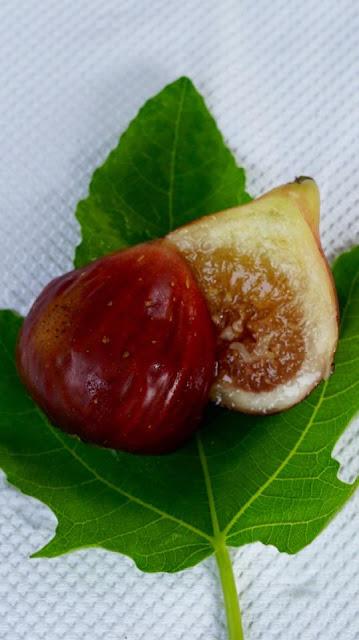 BAYERN FEIGE Fig