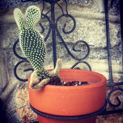 Planta con posturas humanas