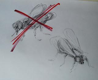 l'eleganza delle mosche