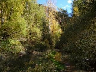 Bosque de ribera. Río Cañamares