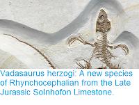 https://sciencythoughts.blogspot.com/2018/01/vadasaurus-herzogi-new-species-of.html