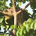 Crianças encontram jiboia de 3 m ao subirem em árvore para brincar, em RO