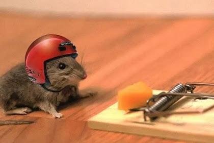 Tips Mengusir Tikus Dirumah