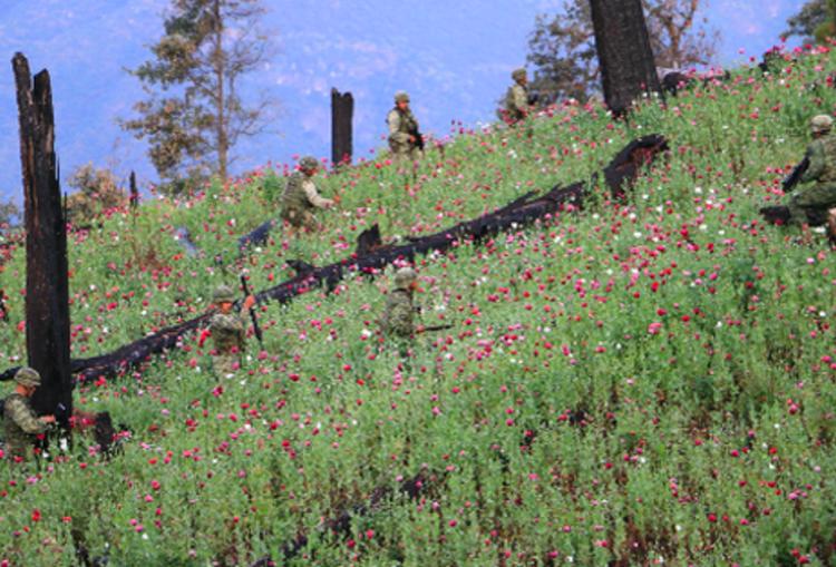 Así es la travesía  de Militares para la erradicación  de la droga en la Sierra