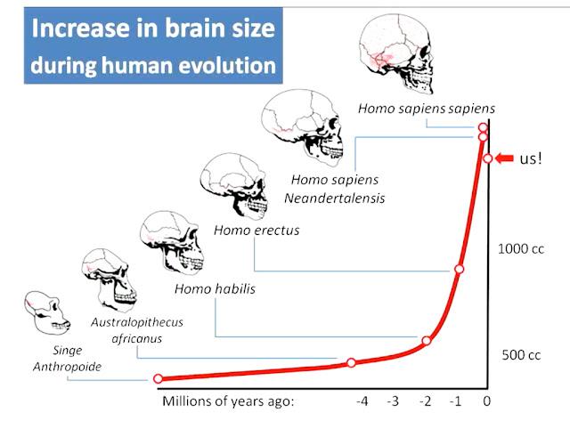 cerebro_evolucion_humana_enigmas