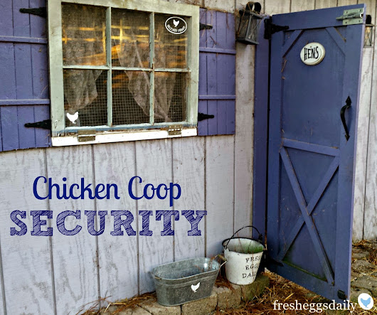 Chicken Coop Security Measures