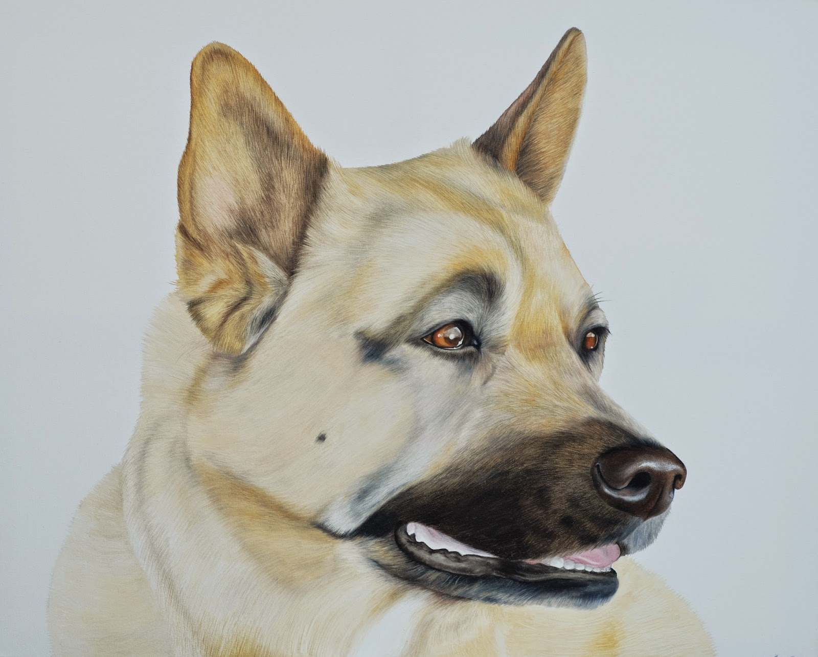 Pet portrait of a Japanese Akita Rottweiler oil on canvas