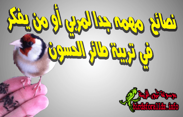 نصائح  مهمه جدا لمربي أو من يفكر في تربية طائر الحسون