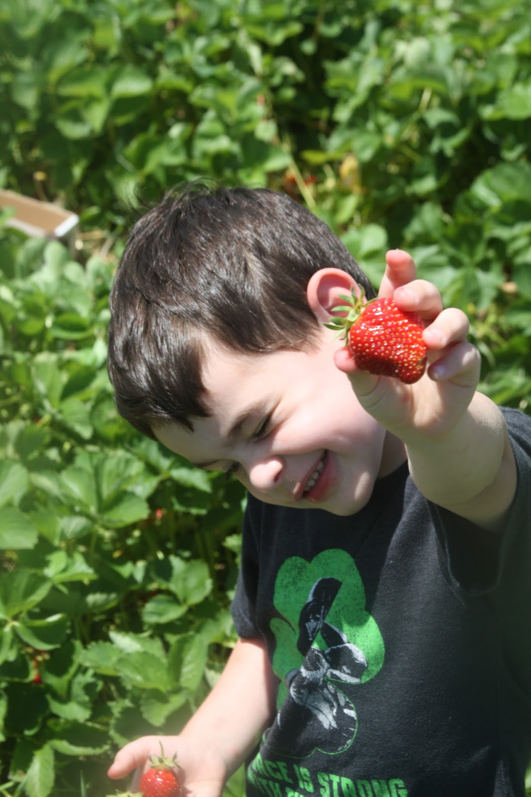 The Evolving Elseners Strawberry Picking