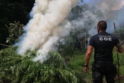 Esplanada: Polícia Civil localiza plantação de maconha avaliada em R$ 2,2 milhões