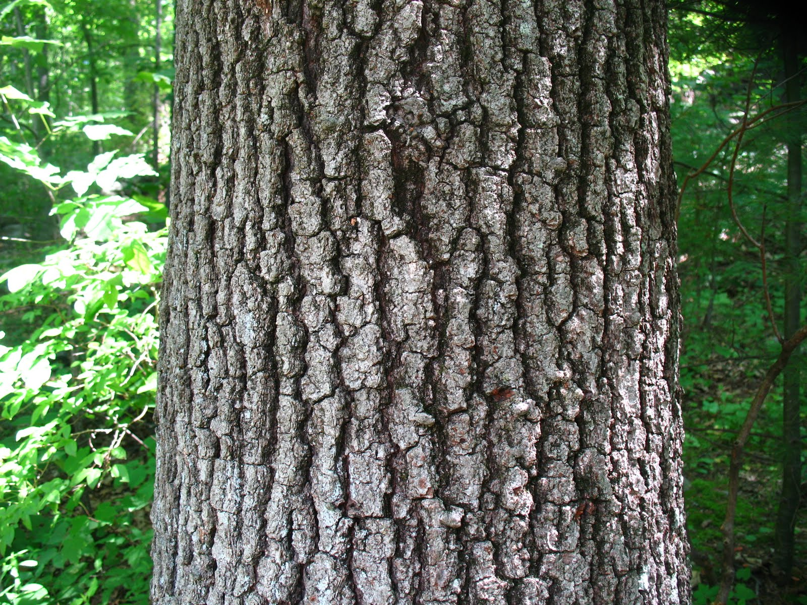 WHS AP Biology 2011: Different Types of Carbohydrates Different Types Of Tree Bark