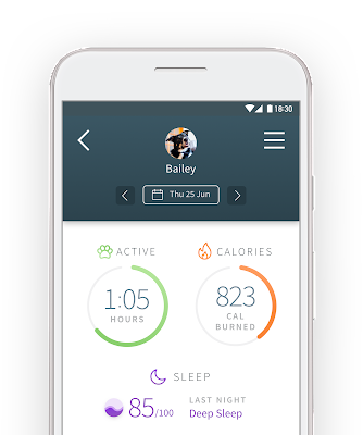 Sure Petcare app for Animo showing dog's calories burnt, hours of activity and sleep quality