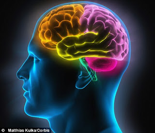 the-human-brain.JPG