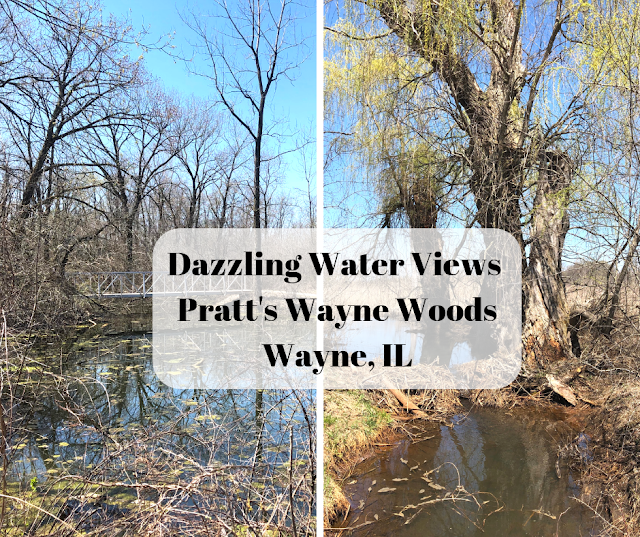 Dazzling Water Views While Hiking at Pratt's Wayne Woods in Illinois
