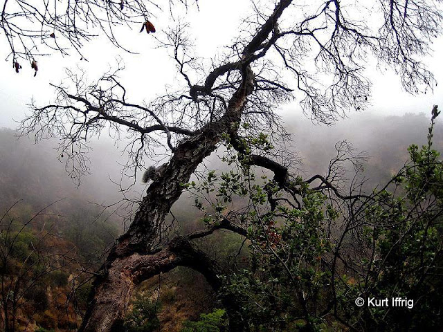Las Flores Canyon is a long forgotten gold mining hotspot, also known as the Haunted Forest.