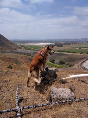 posing on the summit, surveying the farmland