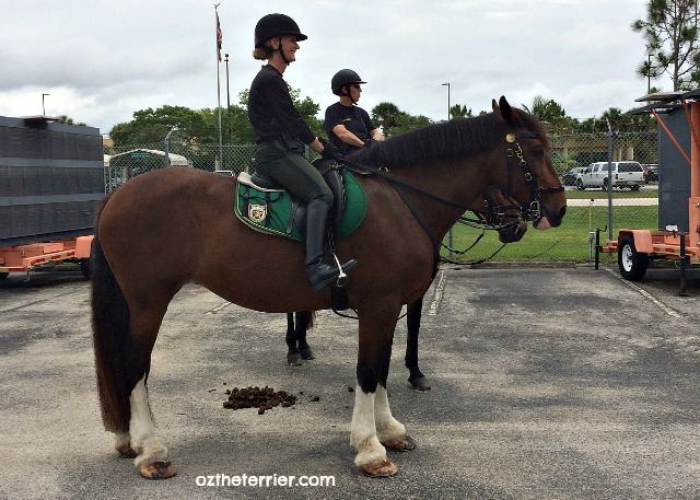 Palm Beach Sheriff Office Mounted Unit