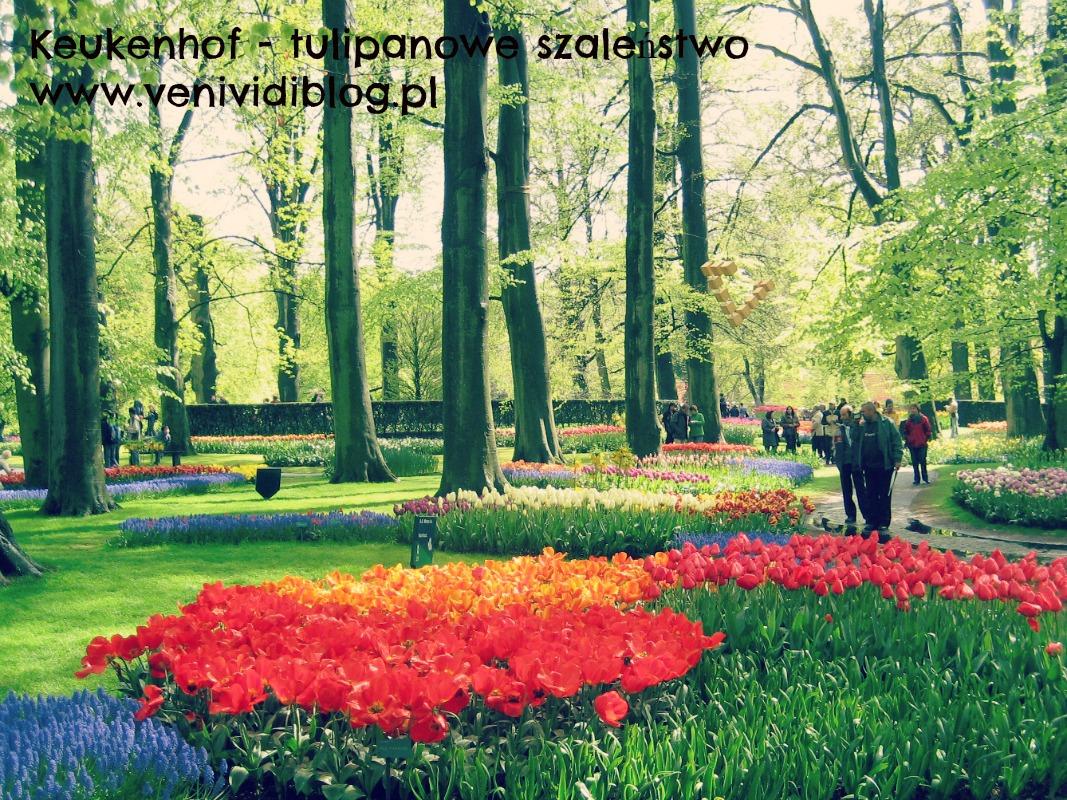 Holandia - Keukenhof i tulipany