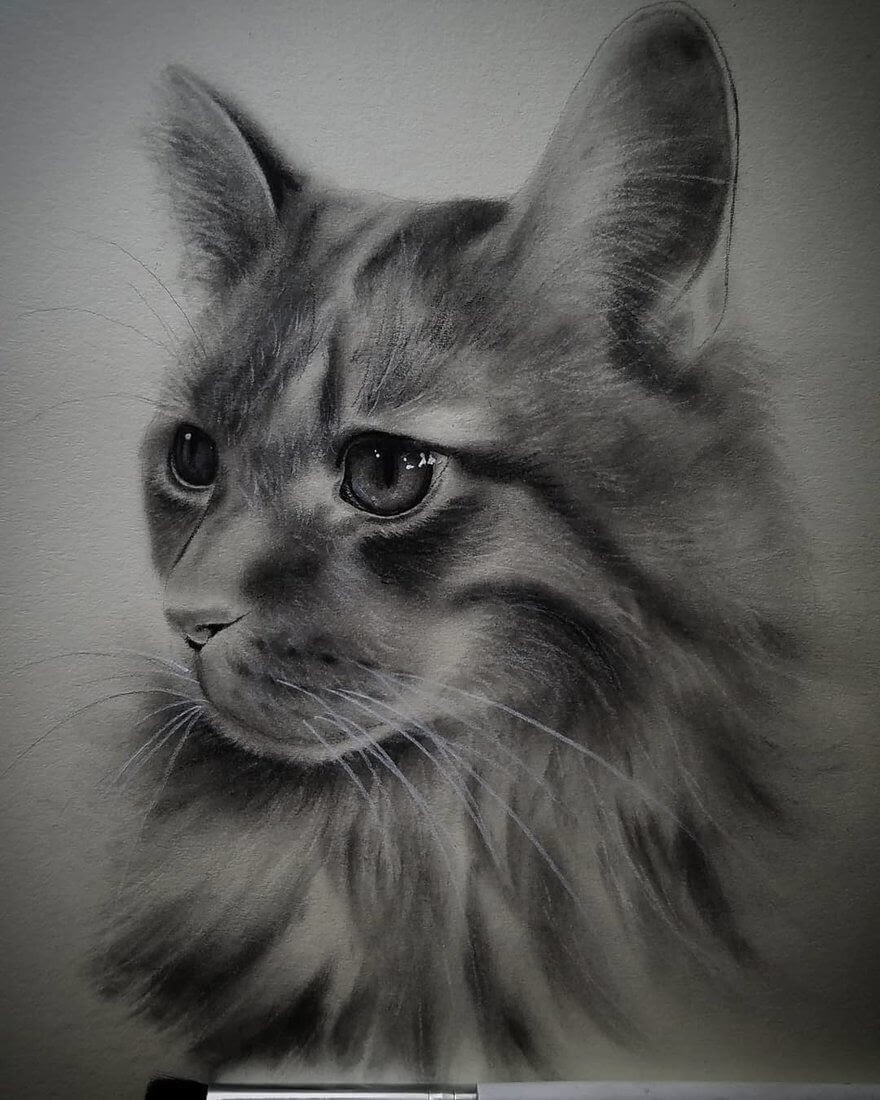 02-Cat-Rene-Lopez-Animal-Pencil-and-Pastel-Portrait-Drawings-www-designstack-co