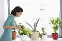 http://steviaven.blogspot.com/2017/03/8-plantas-que-purifican-el-aire-hogar-casa.html