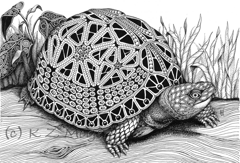 01-Box-Turtle-Kristin-Moger-Animal-Portraits-Dressed-with-Zentangle-Textures-www-designstack-co