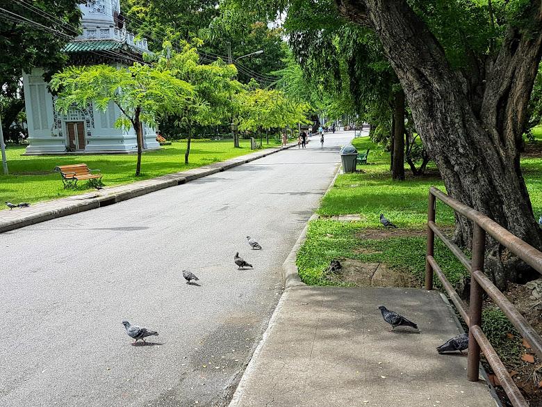 公園內有許多的動物