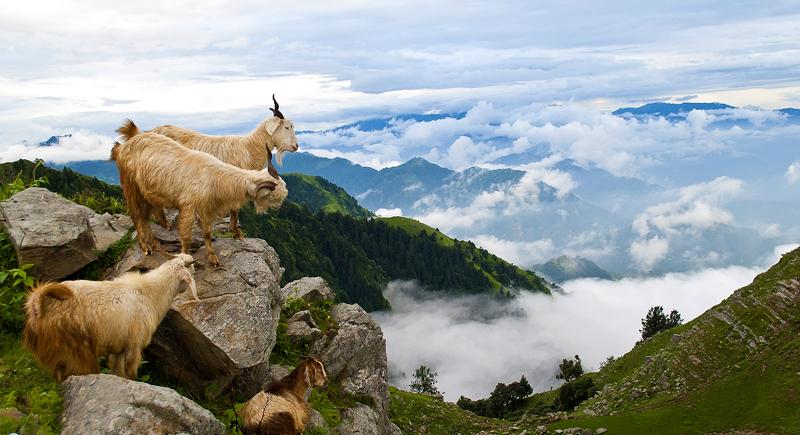 10 most beautiful photography of himachal pradesh web