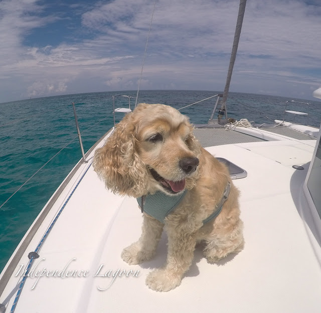 Boat dog sailing a Lagoon 380 Catamaran in the Florida Keys