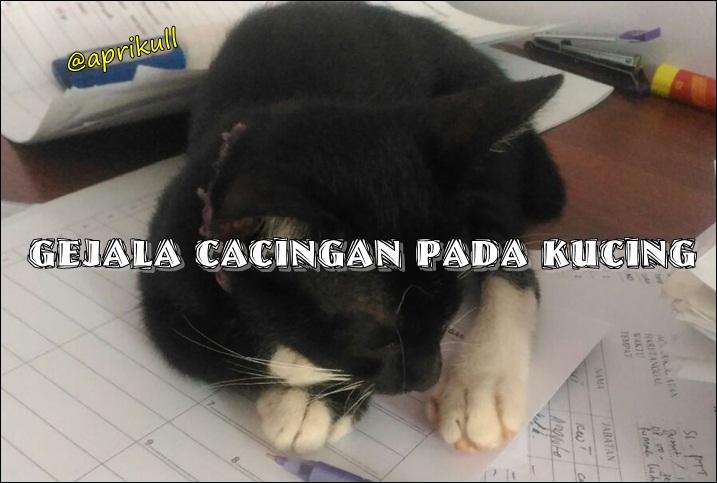 Gejala Cacingan Pada Kucing