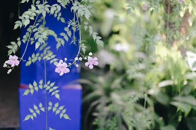Flowers in Jardin Marjorelle